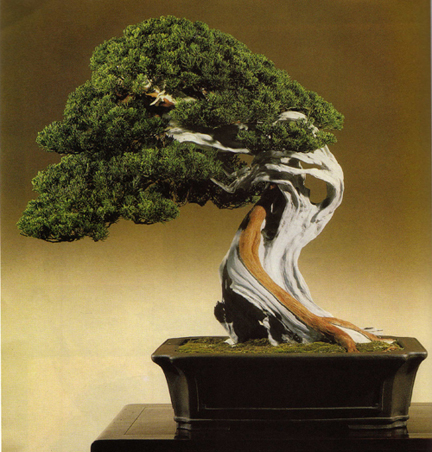 Michael Redgrave: The Spiritual Nature of Bonsai | Art As Worship - Bonsai Tree Art