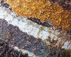 RStone Lichen 3